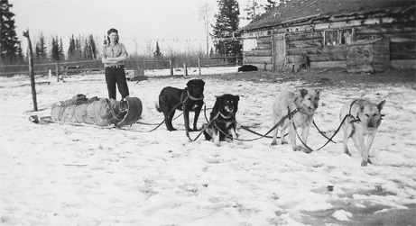 Katy Johnston with dog team in front of her homestead in northern Alberta, around 1943